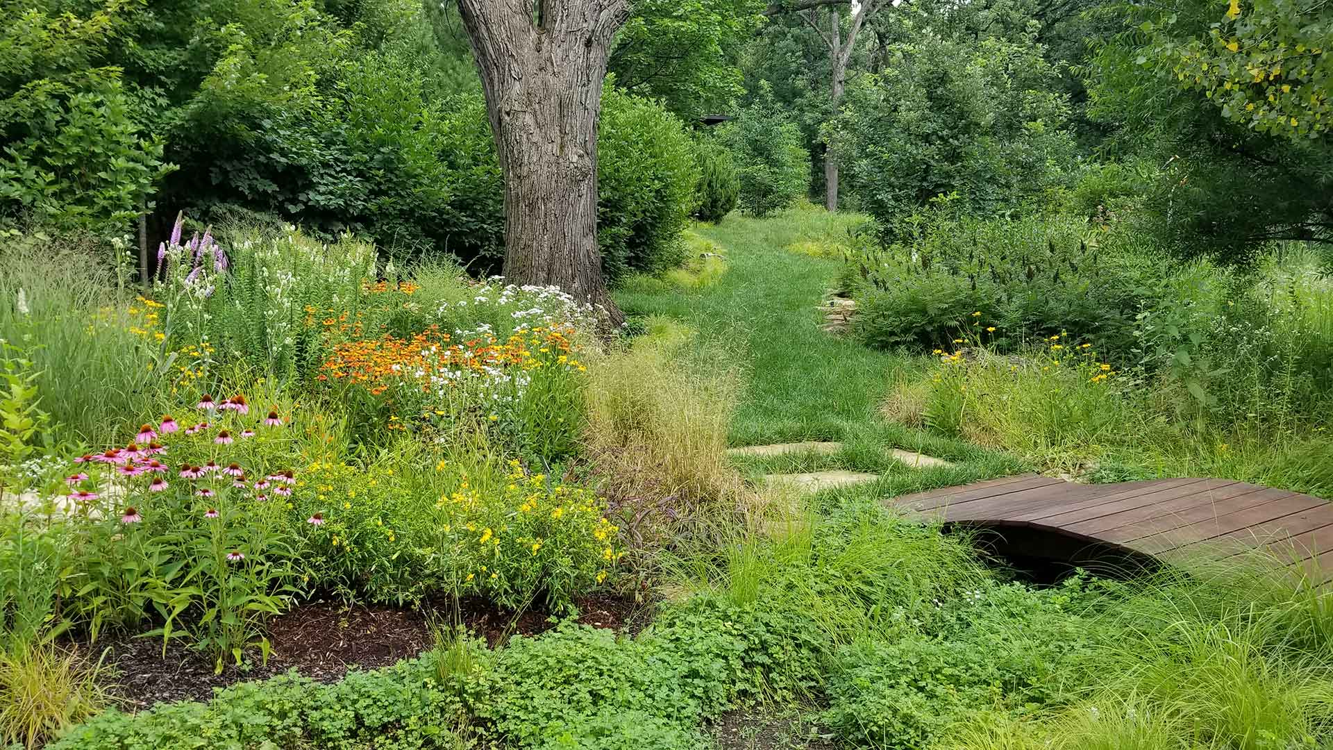 Sustainable and eco-friendly landscaping with native plants in Lake Forest, IL.
