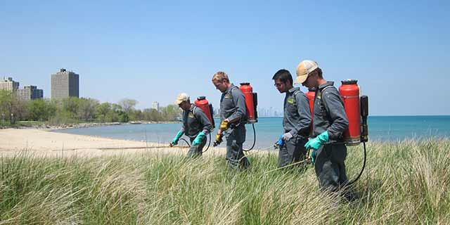 Invasive species control treatments at a natural area in Orland Park, IL.