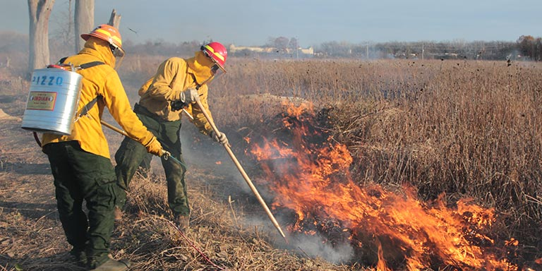 Prescribed fire services at a natural area in Orland Park, IL.