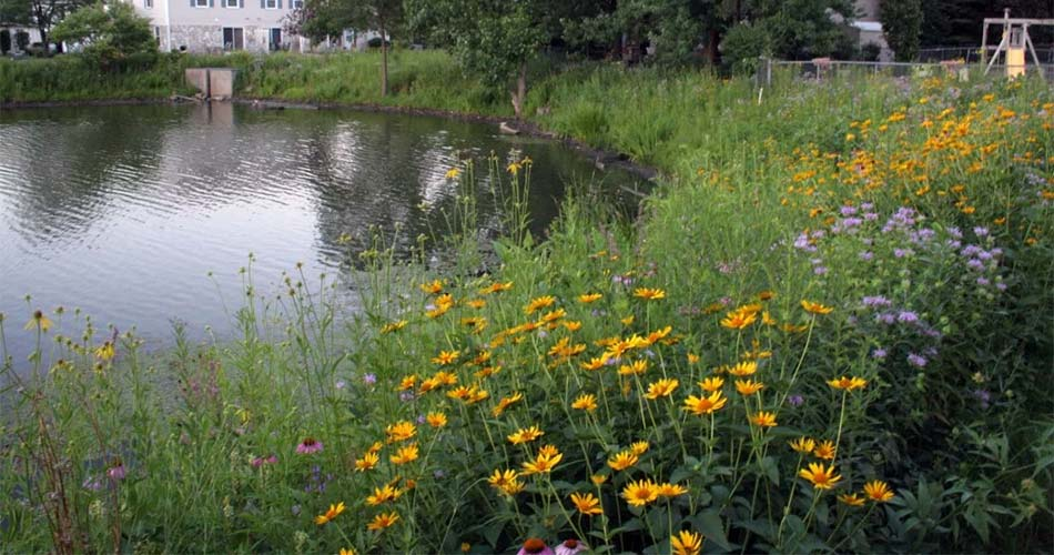 A pond in Nantucket Cove with stormwater management solutions in Schaumburg, IL.